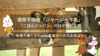 湘南平塚「ジャージー牛乳」の場所(ロケ地)どこ?かわいい酪農ガールの奮闘に佐野岳が感激!