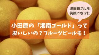 小田原の「湘南ゴールド」栽培地はどこ?浅田舞が歓喜!黄金柑×今村温州の希少なオレンジ