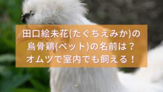 田口絵未花の烏骨鶏(ペット)の名前は?オムツで室内でも飼える!5/29有吉反省会