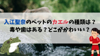 入江聖奈のペットのカエルの種類は?毒や歯はある?どこがかわいいのか魅力を調査